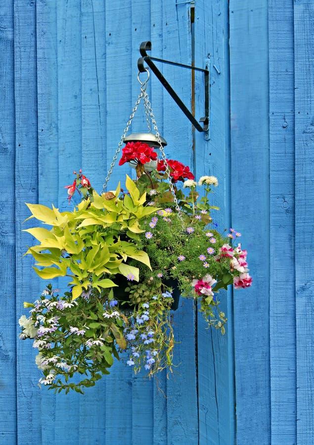 Hängande korg på blått staket royaltyfria bilder