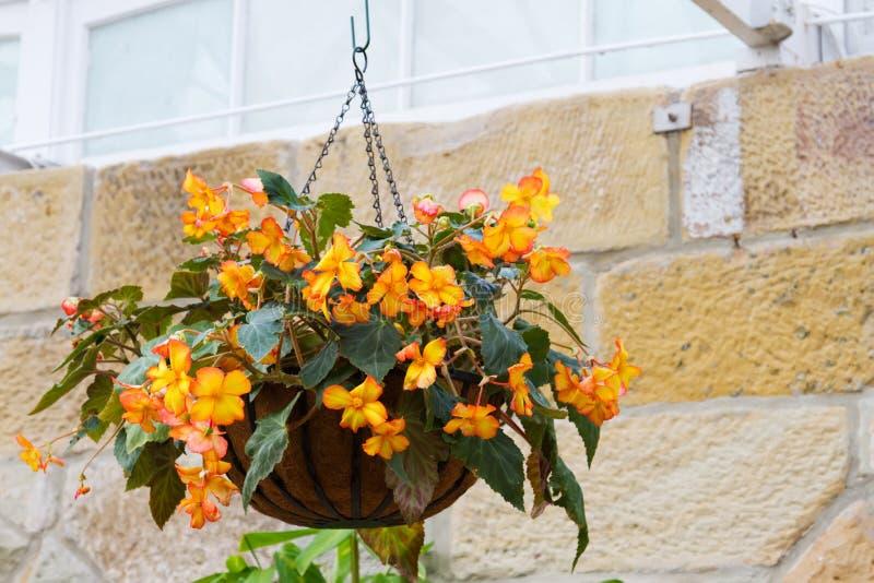 hängande kruka för blomma arkivfoton