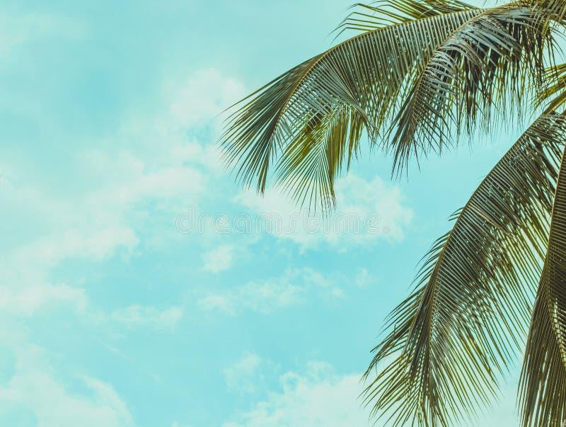 Hängande palmträdfilialer och himmel fotografering för bildbyråer