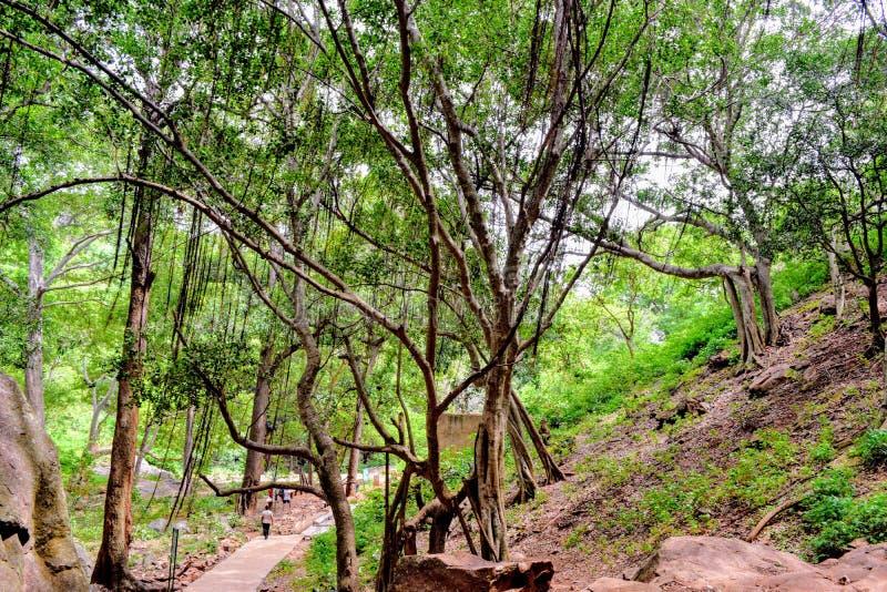 Hängande tree royaltyfri fotografi