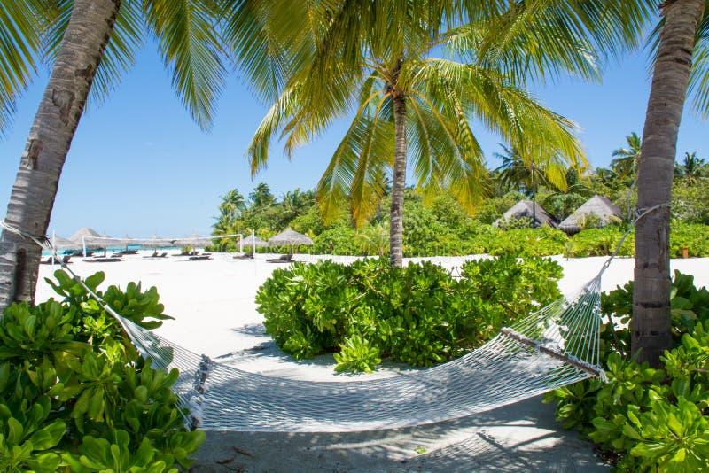 Hängematte nahe tropischem Strand bei Malediven stockfotografie