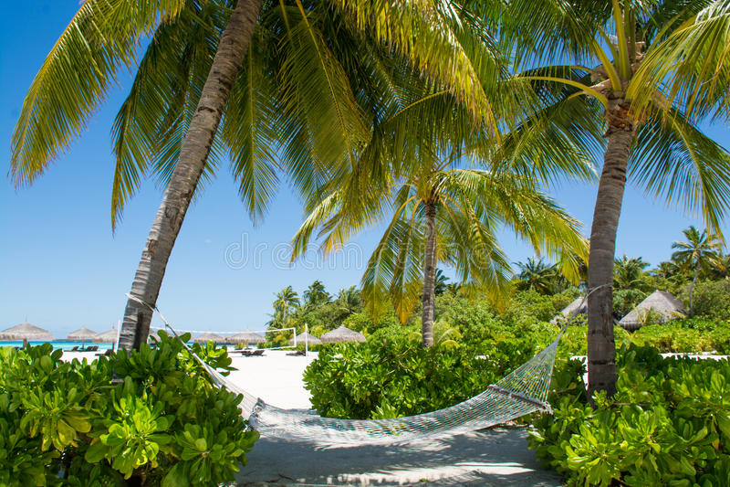Hängematte zwischen Palmen in der Tropeninsel stockfotografie