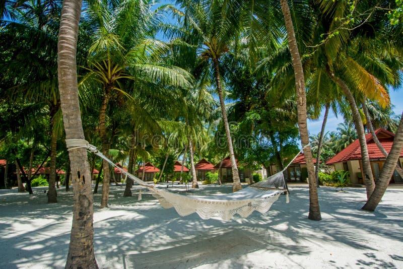 Hängematte zwischen Palmen am tropischen Strand stockfotografie
