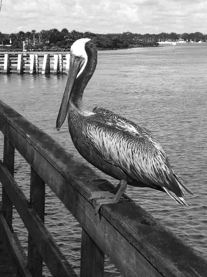 Hängen durch das Dock FL stockfotos