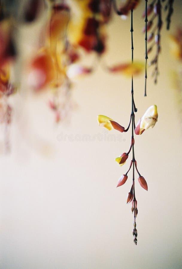 Hängende Blumen