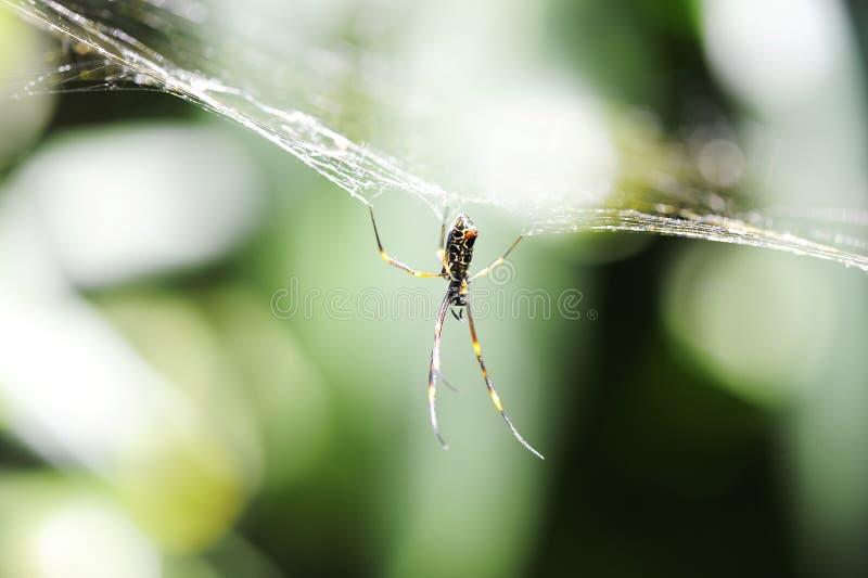 Hängende Spinne lizenzfreie stockfotografie
