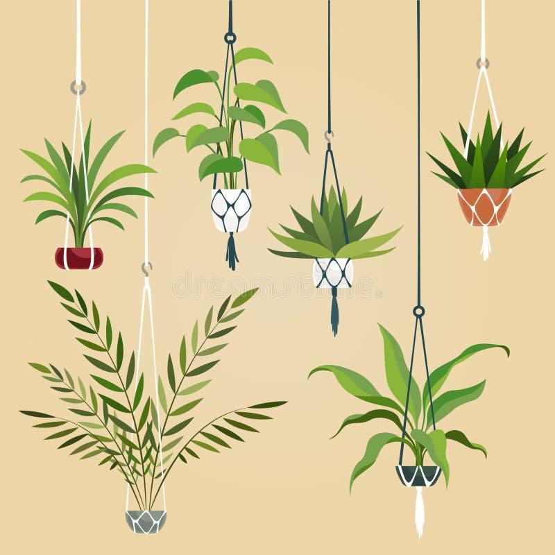Hängende Zimmerpflanze Zimmerpflanzen mit Makrameeaufhänger Skandinavischer pflanzender Vektorinnensatz vektor abbildung