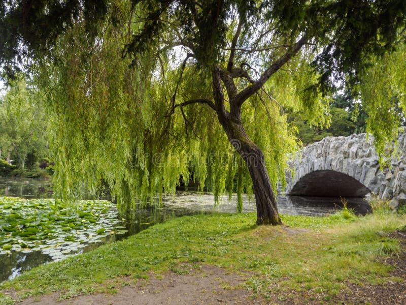 Hängender Weidenbaum durch eine Teich- und Steinbrücke lizenzfreie stockfotografie