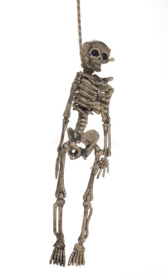 Hängendes Skelett stockbild