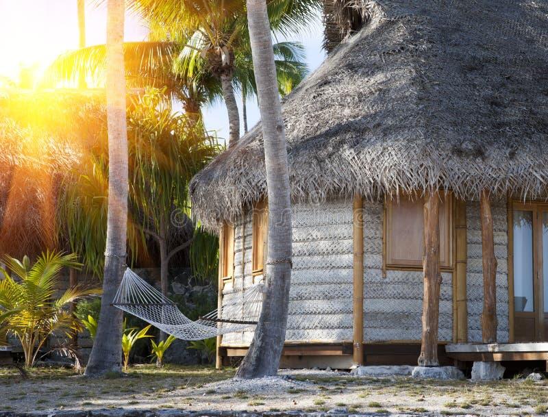 Hängmatta mellan palmträd i en tropisk trädgård och det wattled huset royaltyfri foto