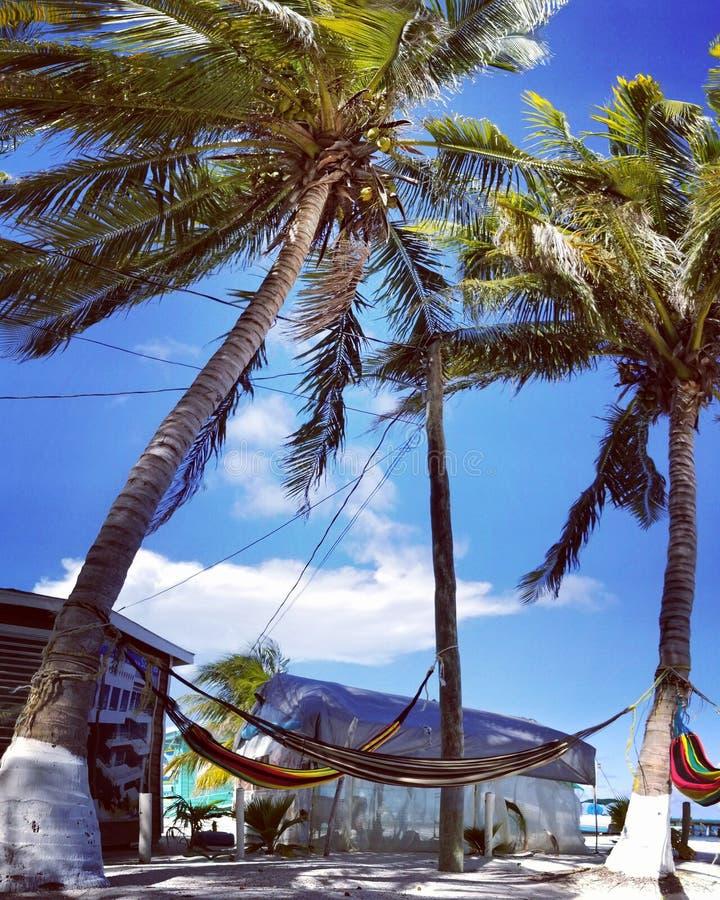 Hängmattor mellan 2 palmträd arkivfoton