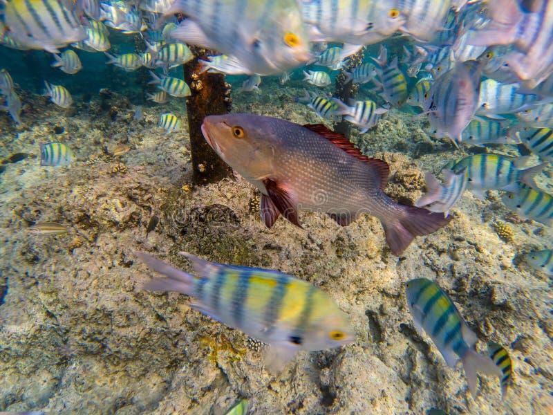 häpnadsväckande undersea värld för rött hav royaltyfri fotografi