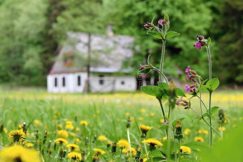 Härlig äng med lösa vårblommor, lantligt europeiskt gammalt hus på bakgrunden royaltyfria bilder