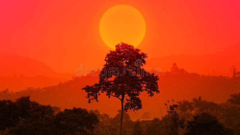 Härlig afrikansk solnedgång med ett stort träd Kontur av det stora trädet över den stora inställningssolen Skogsolupps?ttning epi arkivbilder