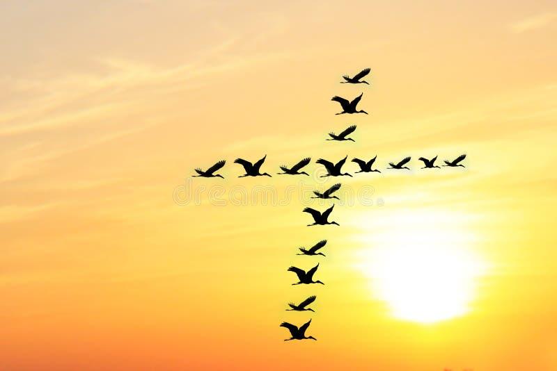 Härlig aftonsky & fåglar som bildar det heliga korset