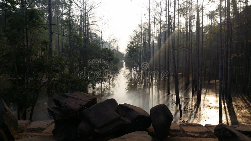 Härlig Angkor skog arkivfoto