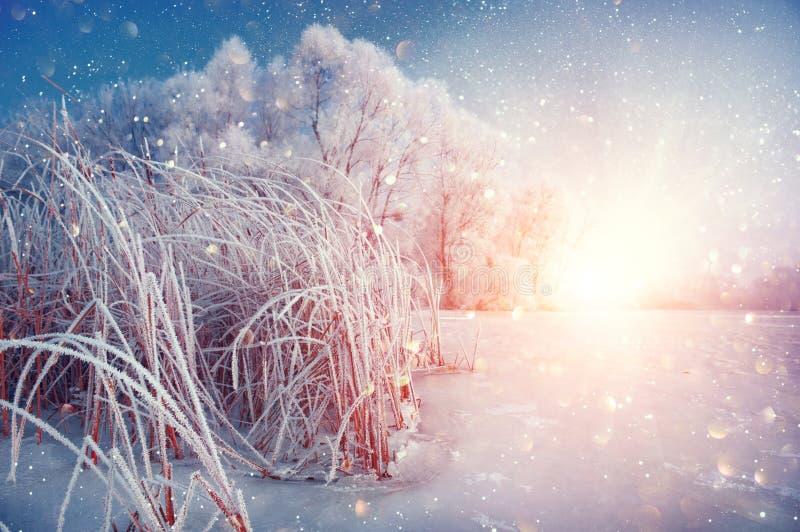Härlig bakgrund för vinterlandskapplatsen med snö täckte träd och den med is floden arkivfoton