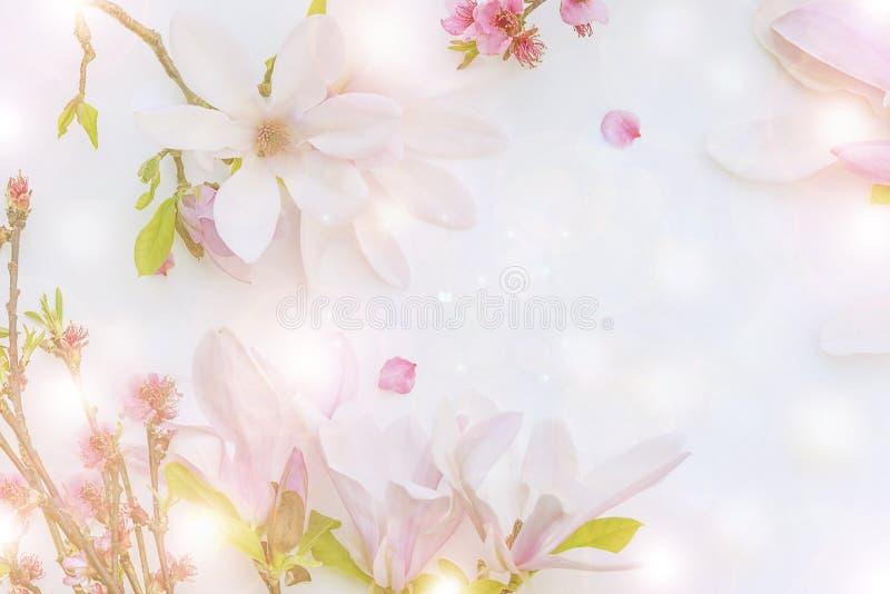 Härlig bakgrund med den rosa magnolian blommar och persikablomningen royaltyfri bild