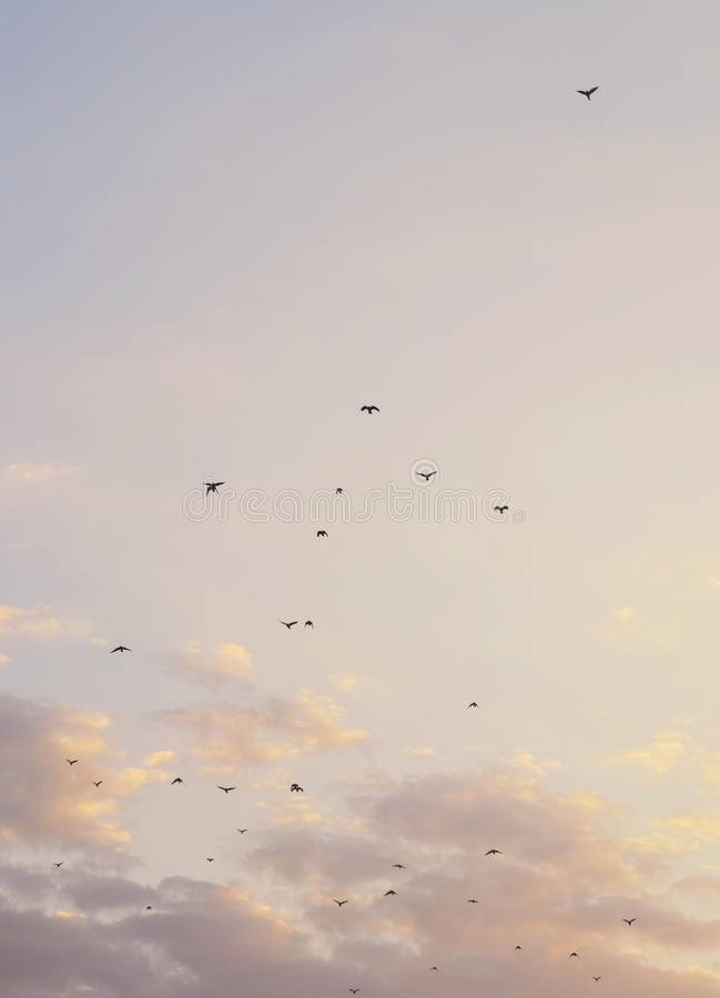 Härlig bakgrund med moln och fåglar arkivfoto
