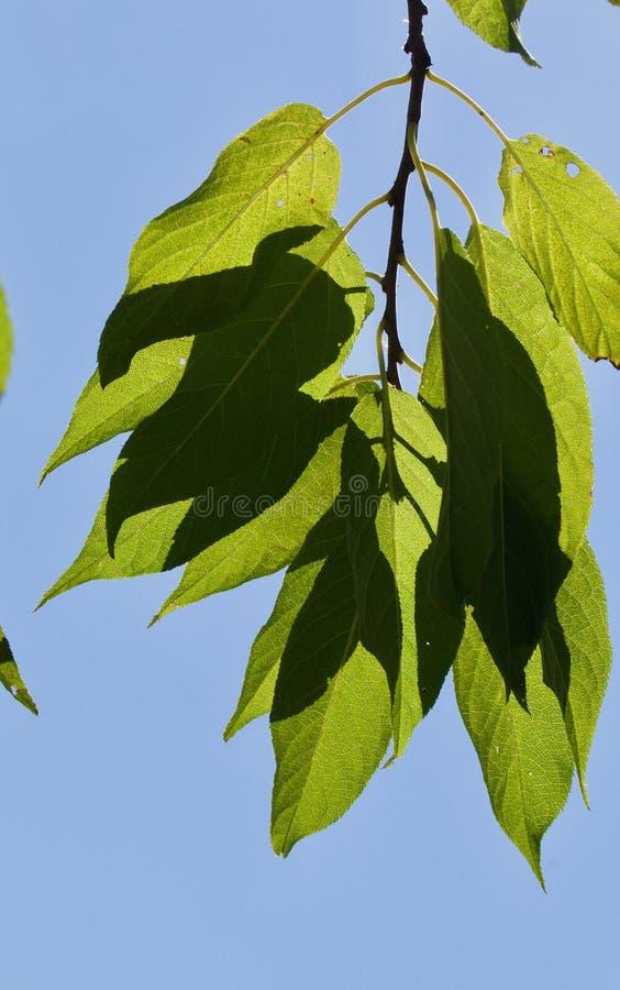 Härlig baksida tände ljust - gräsplansidor i solskenet arkivfoto