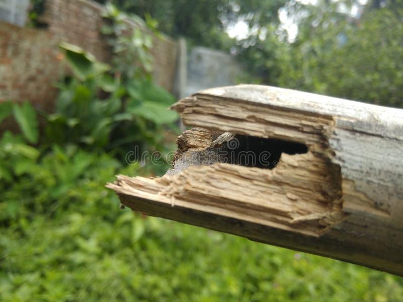 härlig bambu fotografering för bildbyråer