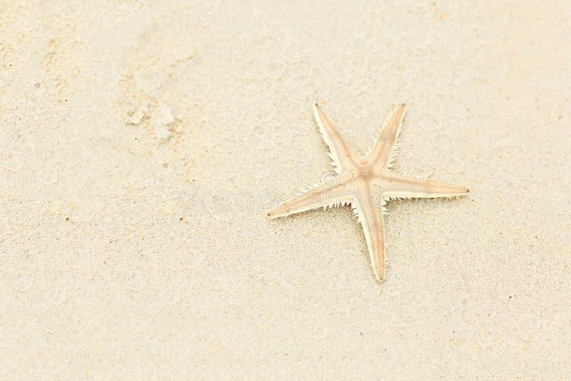 Härlig beige sjöstjärna på sanden, loppbegrepp på den tropiska sjöstjärnastranden kopiera avst?nd Gorizontal format royaltyfri foto