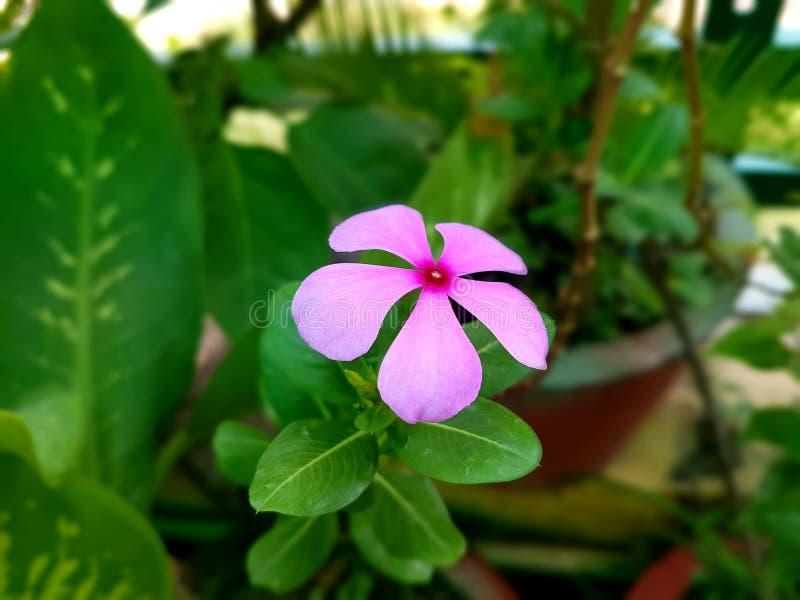 Härlig bild av blomman i en trädgård arkivbild