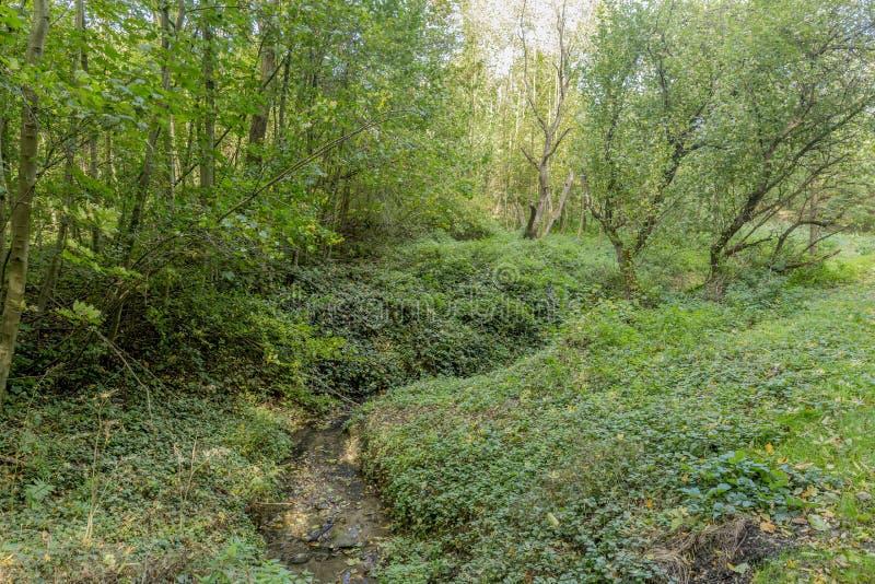 Härlig bild av en ström i skogen på en solig höstdag arkivfoton