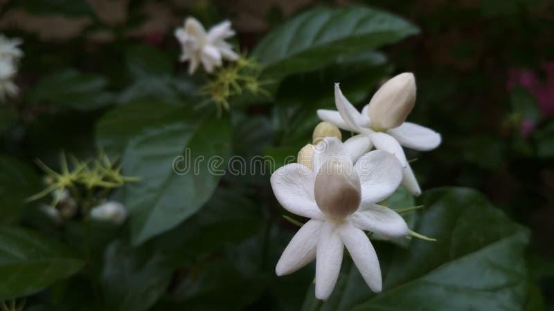 härlig bild för vit blomma, grönt blad royaltyfri foto