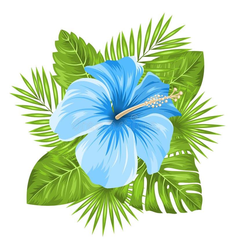 Härlig blå hibiskusblommablomning och tropiska sidor vektor illustrationer
