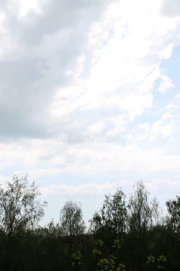 Härlig blå himmel med försiktiga fjäderlika vita moln royaltyfri fotografi