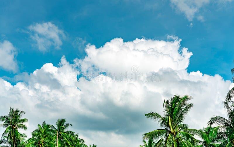 Härlig blå himmel och vita stackmolnmoln mot kokospalmen i lycklig och kylig ut dag Medan bort tid på tropisk sommar arkivfoto
