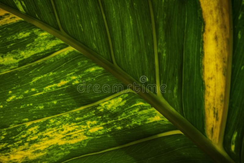 Härlig bladfärg och texturnärbildbild arkivbilder