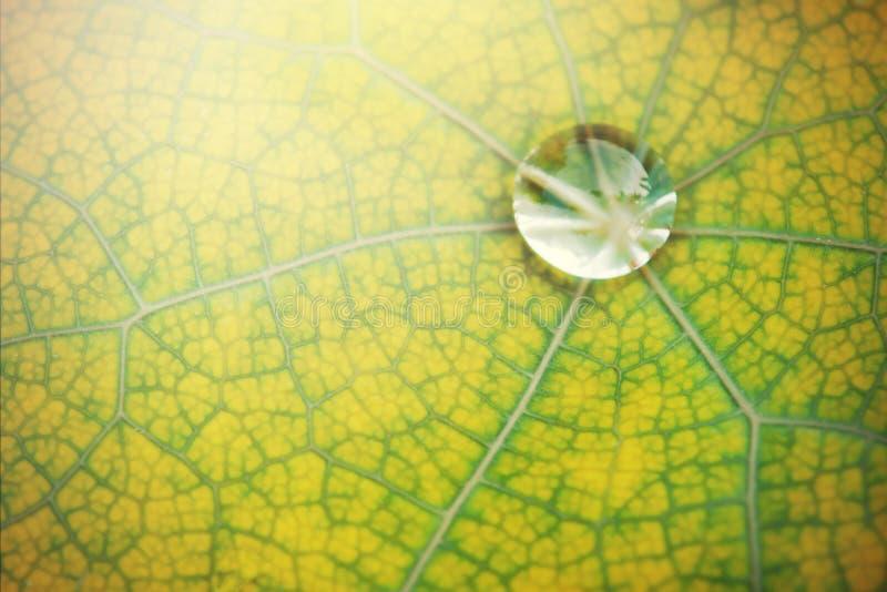Härlig bladtextur för grön växt med fuktighetsdroppar av vatten royaltyfri bild