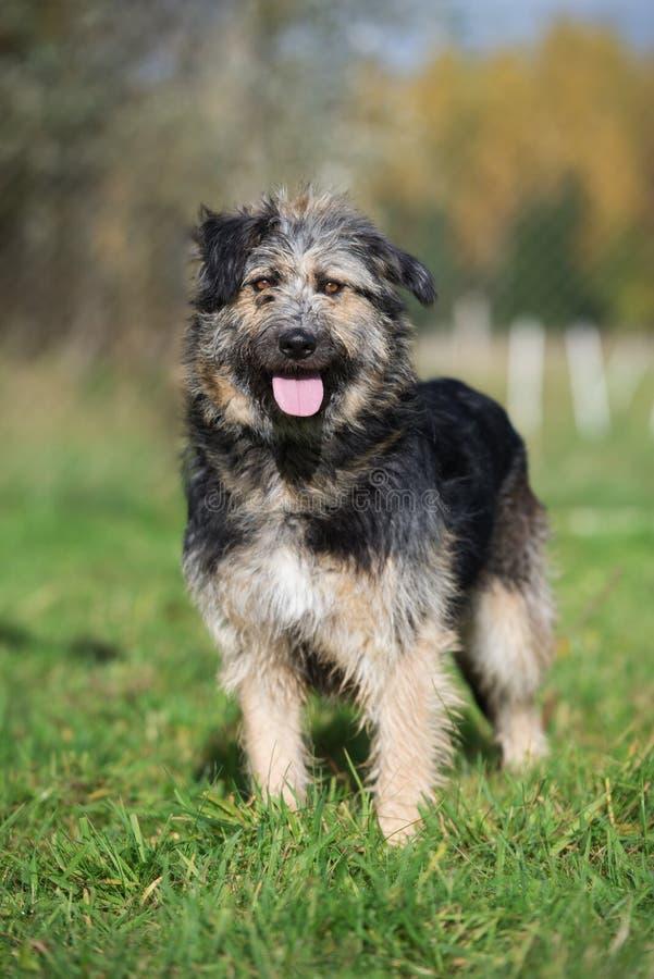 Härlig blandad avelhund som utomhus poserar royaltyfria foton