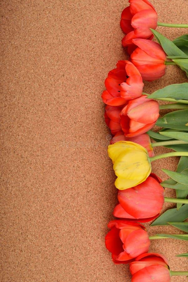 Download Härlig Blom- Linje Med Röda Tulpan Och En Gul Tulpan I Th Arkivfoto - Bild av blom, naturligt: 78727204