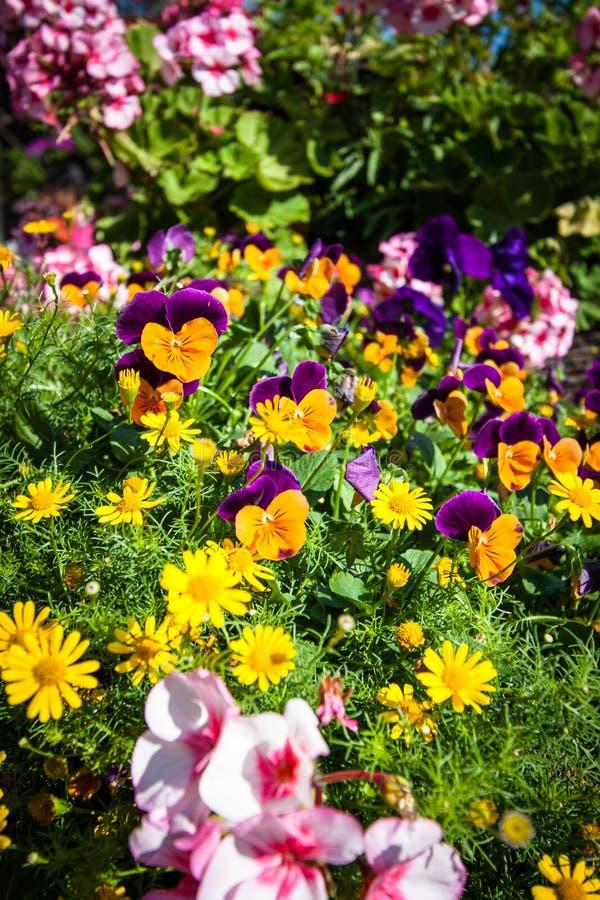 härlig blomma royaltyfria bilder