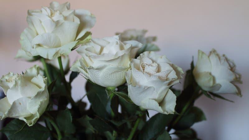 Härlig blomma av en trevlig färg och en angenäm färg royaltyfria foton