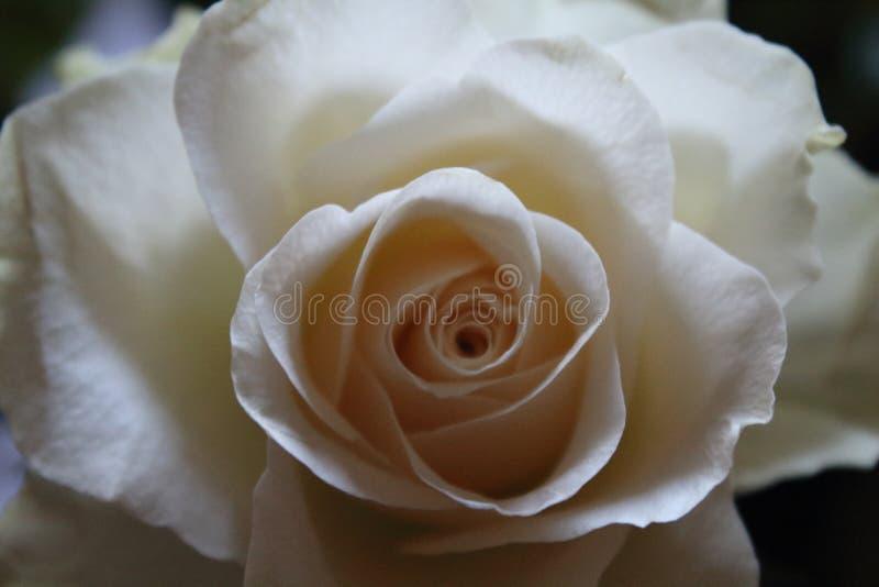 Härlig blomma av en trevlig färg och en angenäm färg arkivbilder