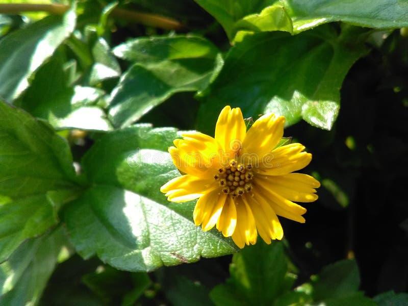Härlig blomma av Indien arkivbilder