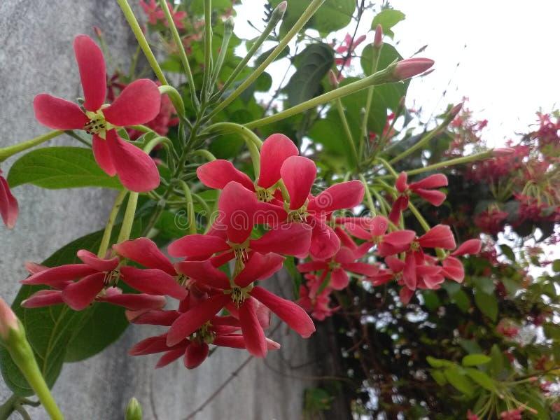 Härlig blomma av Indien royaltyfri bild