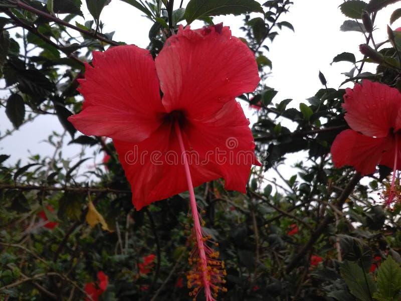 Härlig blomma av Indien royaltyfri foto