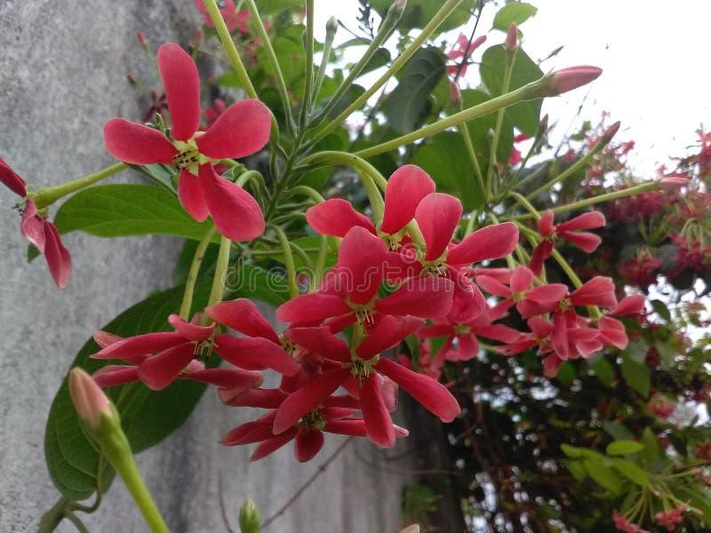 Härlig blomma av Indien fotografering för bildbyråer