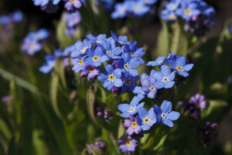 Härlig blomma av ljust blåttfärg royaltyfri bild