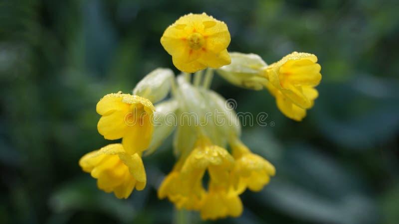 Härlig blomma för berg fotografering för bildbyråer