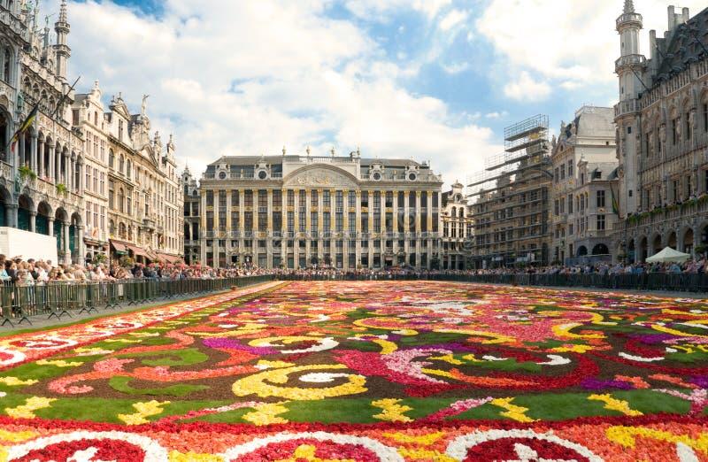 härlig blomma för brussels matta arkivbild