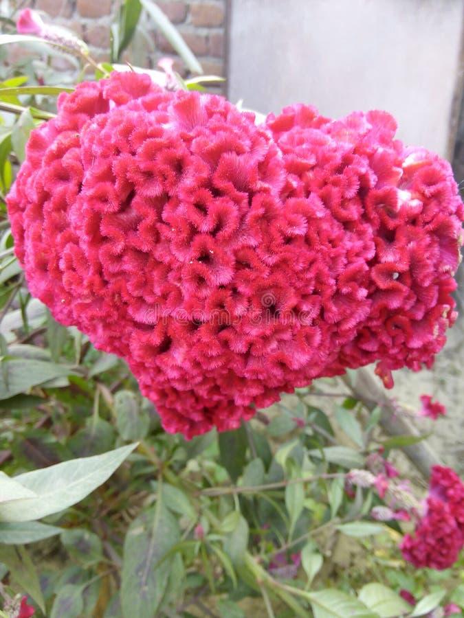 Härlig blomma för härligt folk royaltyfri fotografi