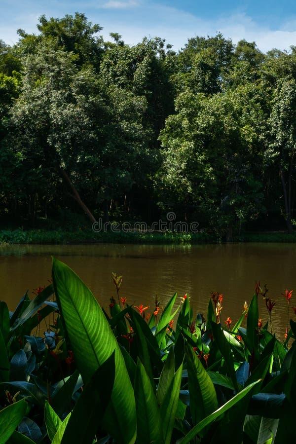 Härlig blomma i floden och himmel arkivbilder