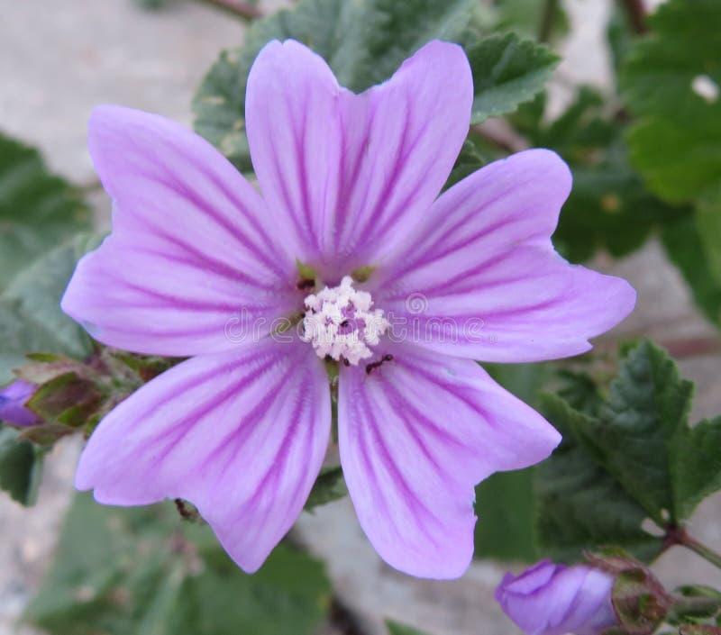 Härlig blomma i ljusa färger och läcker lukt royaltyfri bild