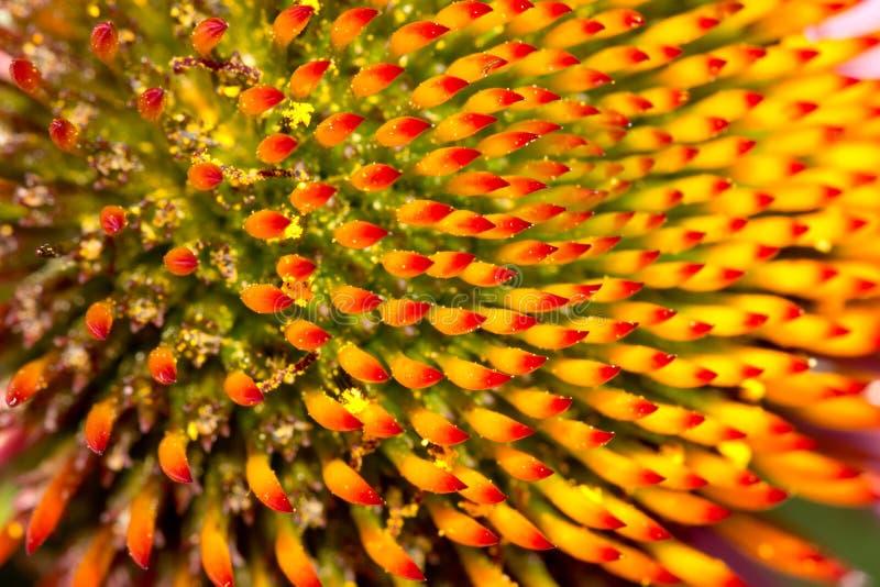 härlig blomma i natur Makro arkivfoton
